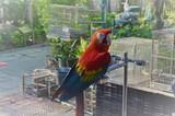 A Parrot in Yuen Po Street Bird Garden
