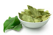 Dried bay leaves in white ceramic bowl next to fresh bay leaves isolated on white.
