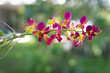 pink yellow orchid branch in nature