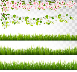 Several grass and blossom of cherry and sakura borders. Vector.