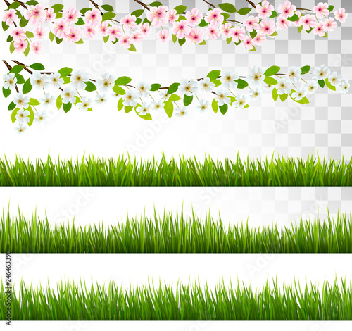 Several grass and blossom of cherry and sakura borders. Vector. - 246463390