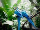 Macaw Arara Brazil