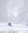 lone tree in a blizzard in minnesota