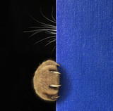 The cat hid behind the blue book. Only his paw with long and sharp claws and his whiskers are visible. Black background.