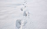 Lots of footsteps on the snow - 246564984