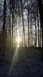 canvas print picture - Licht durch die Bäume