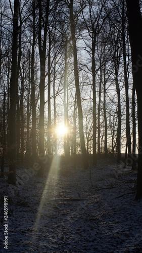 canvas print picture Licht durch die Bäume