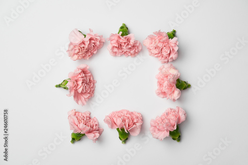 Foto Murales Flat lay of carnations flowers in square arranging on white background
