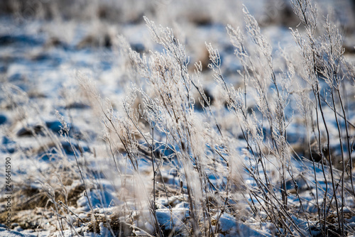 Grass on winter field at the lake covered with hoarfrost on a frosty sunny day