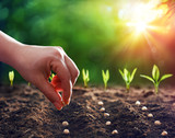 Hands Planting The Seeds Into The Dirt - 246697517
