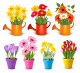 Big collection of spring and summer colorful flowers in pots.  Vector - 246719905