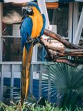 Beautiful parrot close up