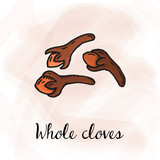 Vector Illustration of Whole Cloves Sketch Style - 246785977