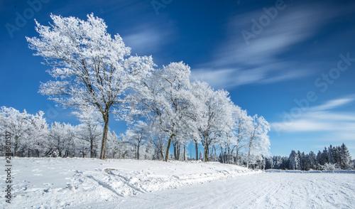 winter - 246801517