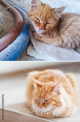 Fluffy cat before and after adoption in home. Dirty stray kitten is slepping on construction site. Poor homeless animal. Cute ginger cat dozing on a couch. Collage, pet adoption theme.