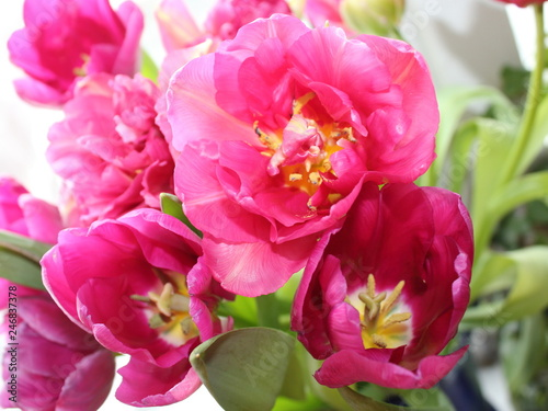 bouquet of tulips - 246837378