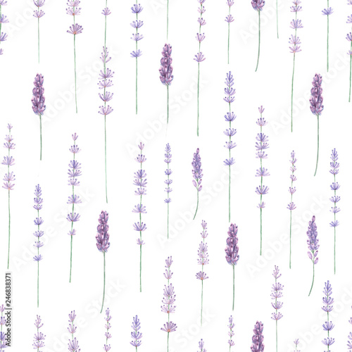 Lavender watercolor seamless pattern. Hand painted watercolor blooming lavender branches on white seamless background. - 246838371