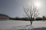 arbre triste force de la nature en hiver - 246880560