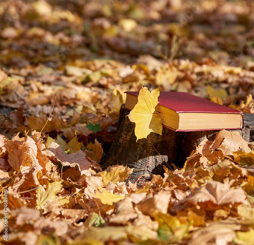 yellow maple leaf and a closed book with a red cover © nndanko
