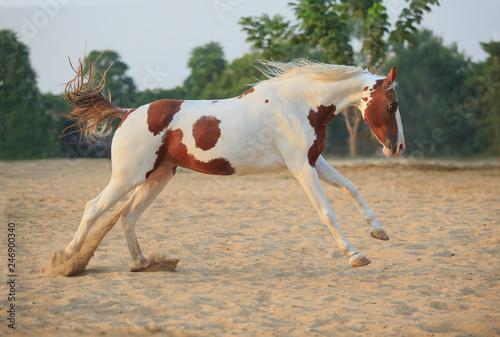 horse running on track