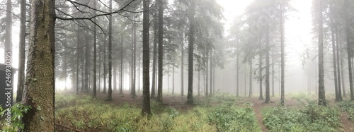 Schwarzwald im Nebel - 246930395