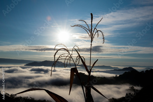Scenery photos at the sea fog spot in the sunrise before in Nong Khai, Thailand, Asia