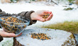 Leinwandbild Motiv Birdseed is sprinkled in the winter