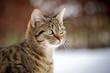Nahaufnahme einer getiegerte Katze