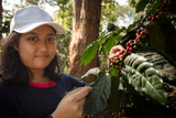 toothy smiling face of younger asian teen woman harvesting fresh arabica coffee seed in coffee plantation - 246962962