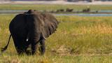 Elephants at Chobe National Park - 246998978