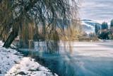 salice piangente sulla riva di uno stagno ghiacciato - 247002796