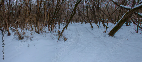 winter landscape with trees and snow - 247002937