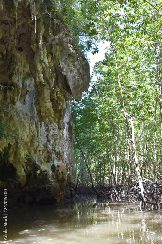 Wonderful mountainous landscape at a kayak trip into the mangrove forest in Ao Thalaine in Krabi in Thailand, Asia - 247015700