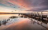 wasservögel im morgenlicht - 247042974