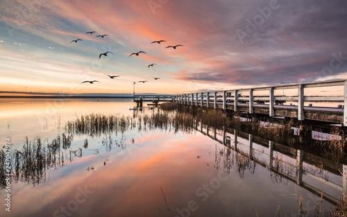 Leinwandbild Motiv wasservögel im morgenlicht