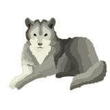 Sticker gray calm wolf who lies rests.