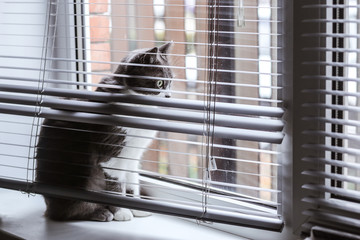 The cat on the window is hiding in the blinds. Cat in conclusion looks at his own life.
