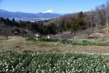 Mt.Fuji seen from Kanagawa Prefecture in Japan