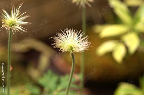Foto Murales 동서양 야생식물 다양한 꽃 식물 정물 백그라운드 사진 이미지