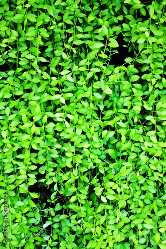 Green leaf for background - 247102320