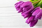 Fresh beautiful purple tulips background on white board, holiday card