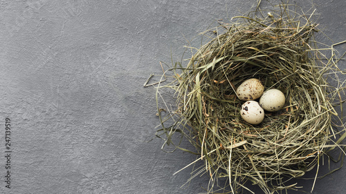 Leinwanddruck Bild Quail eggs in straw nest on gray table