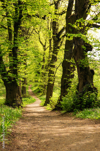 a path is in the green forest - 247144536