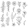 Illustrated doodle flowers, organic lines and shapes, floral design elements.  - 247154988