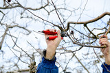 unrecognizable man pruinig apple tree in winter