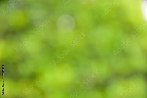 fototapeta na ścianę green bokeh for nature background abstract soft and blur focus