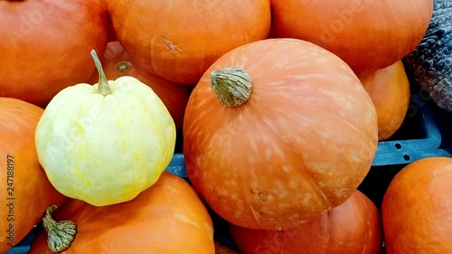 Pumpkin at fruit market and the other day  - 247188197