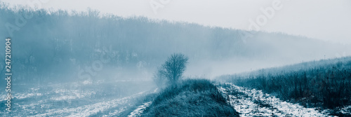 Deciduous forest and fog in the meadow. - 247210904