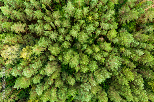 Aerial top down view of green trees. Mixed deciduous and coniferous forest.