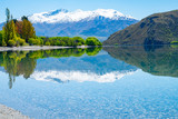 Lake Wanaka from Glendhu Bay beautifully calm reflecting spring color foliage and Southern Alps as backdrop - 247261944